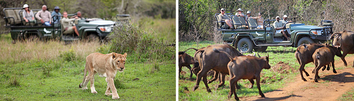 Phinda Mountain Lodge Big 5 Game Drives sightings Phinda Private Game Reserve Luxury Lodge African Safari South Africa